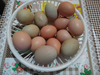 Ovos de Índio gigante