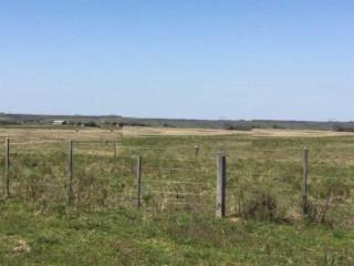 Campo de 153 HA ideal para agricultura e pecuária em Bagé