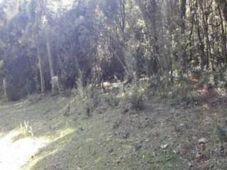 Sitio em Gramado, - Linha Ávila com 5HA