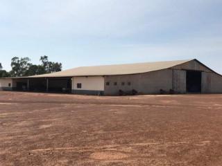 Fazenda Para Arrendamento em Paranatinga-MT