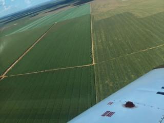 Fazenda Para Arrendar na Região de Primavera do Leste-MT